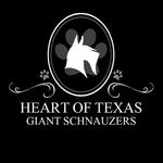 Heart of Texas Giant Schnauzers