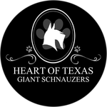 Heart of Texas Giant Schnauzers