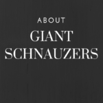 About Giant Schnauzers