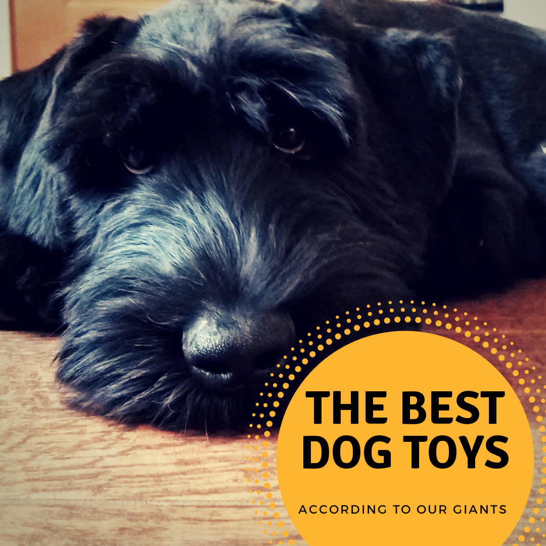 THE BEST TOYS for Giant Schnauzers