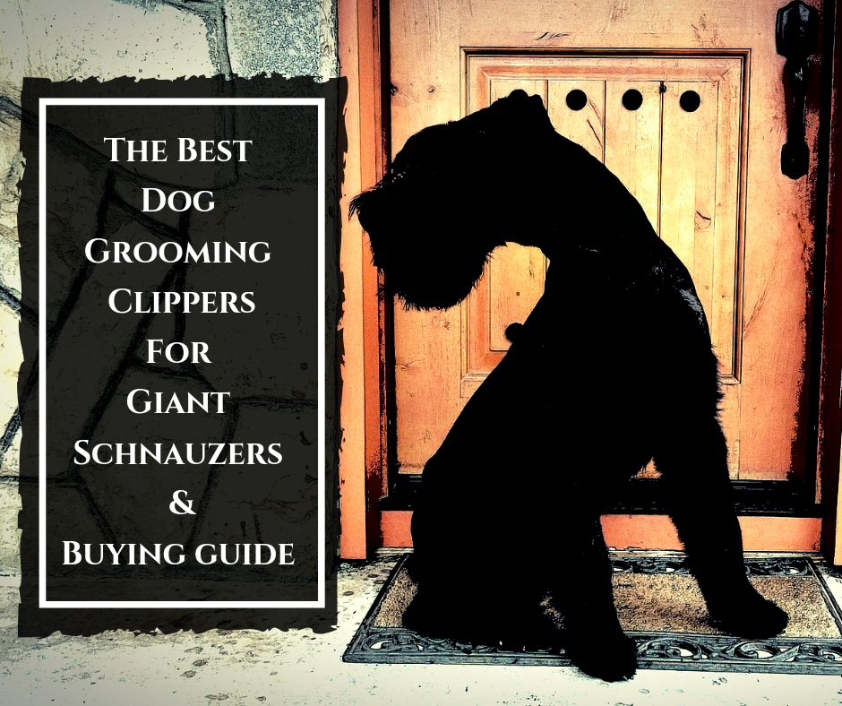 THE BEST DOG GROOMING CLIPPERS FOR GIANT SCHNAUZERS & BUYING GUIDE 2019